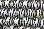 ZSOLDOUT / Acrylic Beads, Zebra Print Black and White 12mm Round