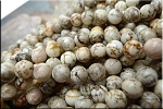 ZSOLDOUT - Magnesite Beads, White Round 8mm