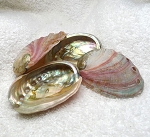 Red Abalone Seashells for Smudging or Burning Incense and Herbs (1)