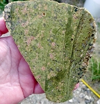 Unakite Slab, Arizona Unakite Jasper, 118x108x7.1mm
