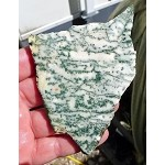 Tree Agate Slab, 106x74x5.8mm